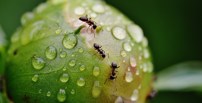 Come eliminare le formiche: rimedi e consigli